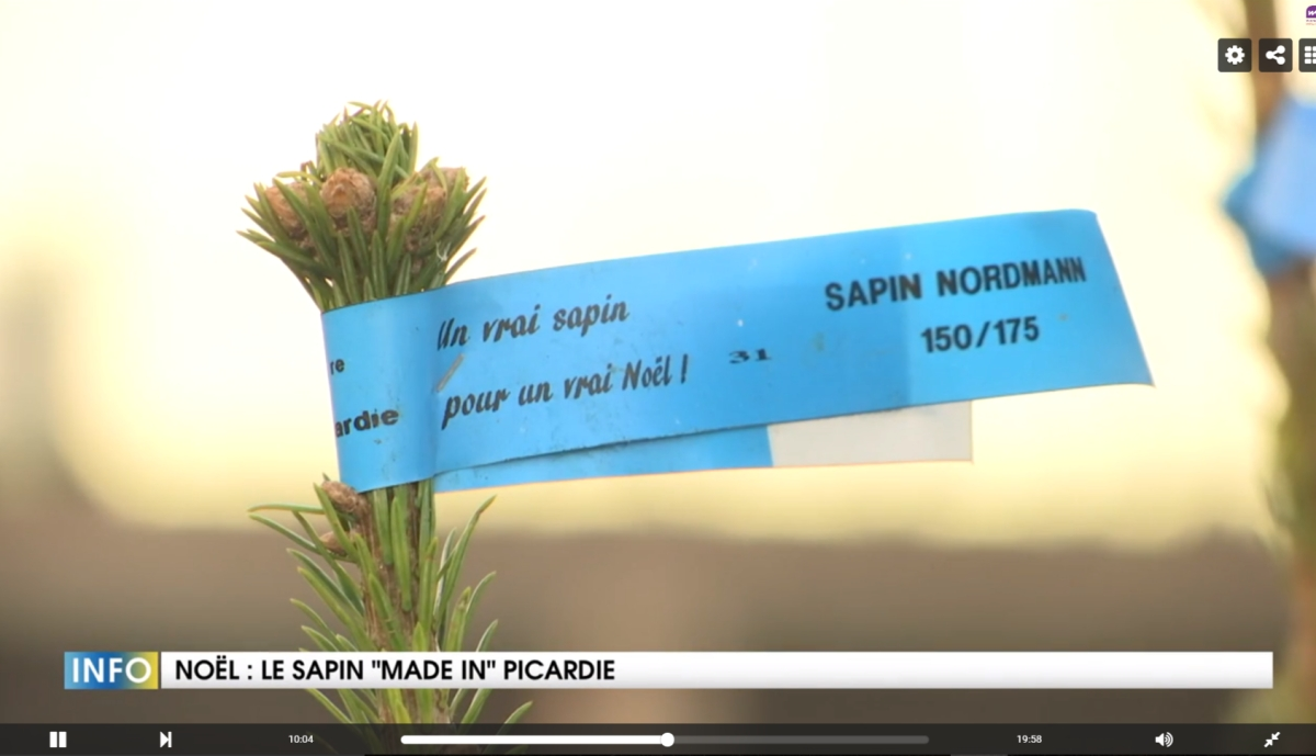 """Le sapin """"made in"""" Picardie"""